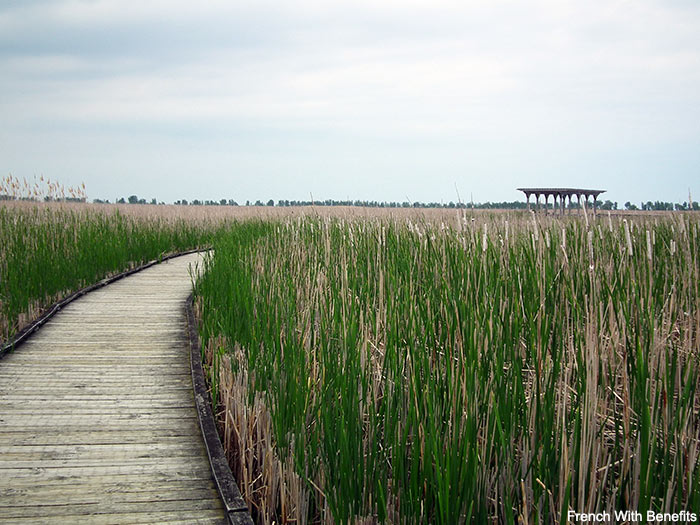 plante-eau-point-pelee-ponton