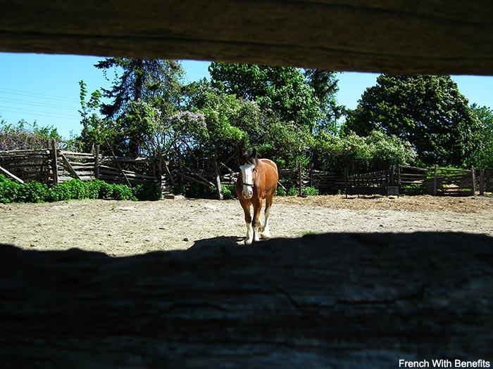 cheval-black-creek-pioneer-village