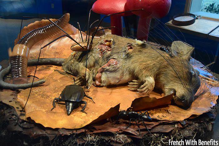 Et il y a aussi un rat crevé...