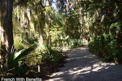 Magnolia-Plantation