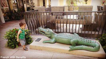 Il y a beaucoup d'alligators à HH !