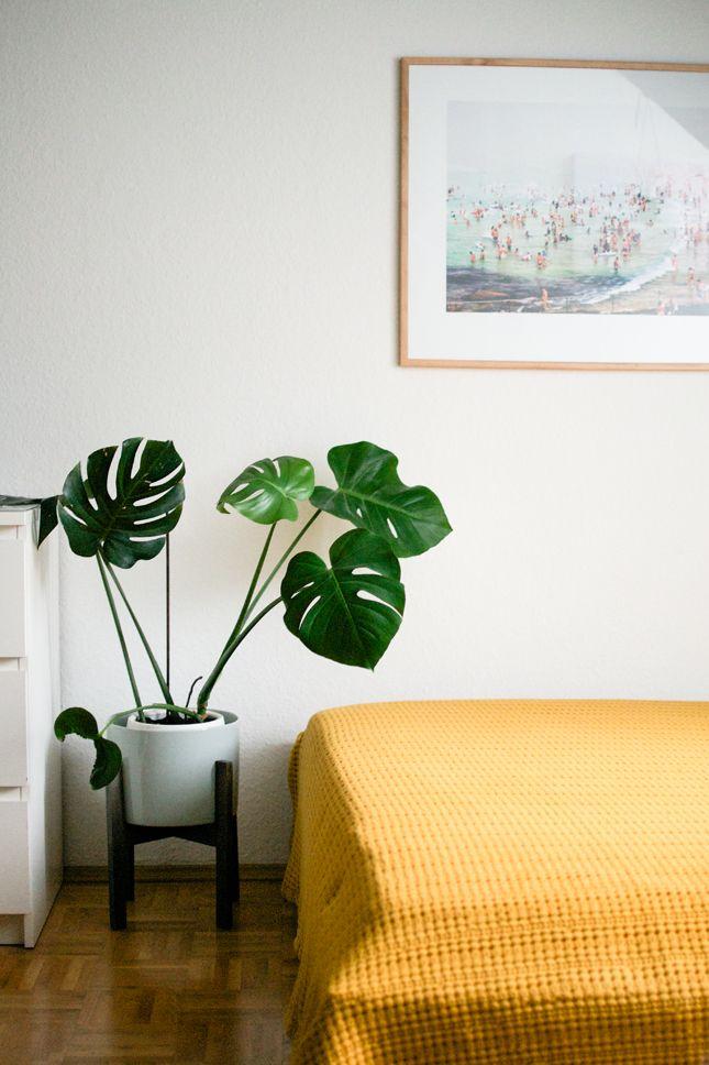 Sentourer de belles plantes  le Monstera  Frenchy Fancy