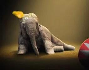 Tierschutzbund – Wildtiere im Zirkus