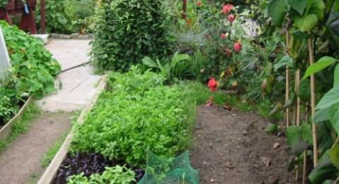 https://i0.wp.com/fresh.co.nz/wp-content/uploads/2012/03/vegetable-garden-460x250.jpg?resize=479%2C260&ssl=1