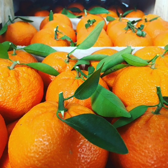 Ortanique clementines after harvest