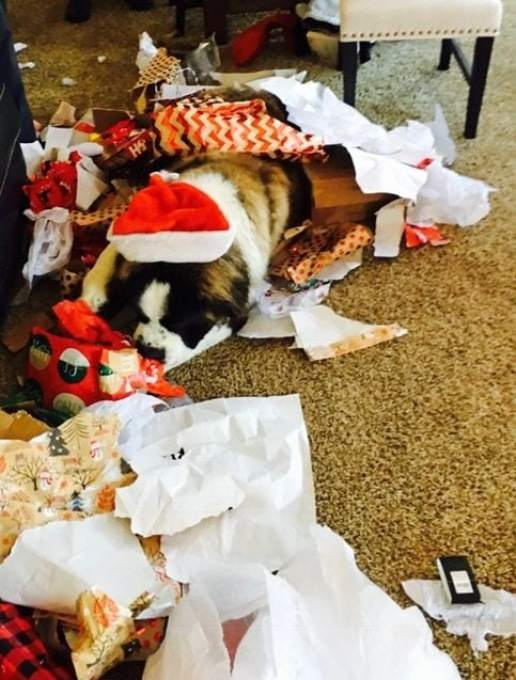 Winstons First christmas