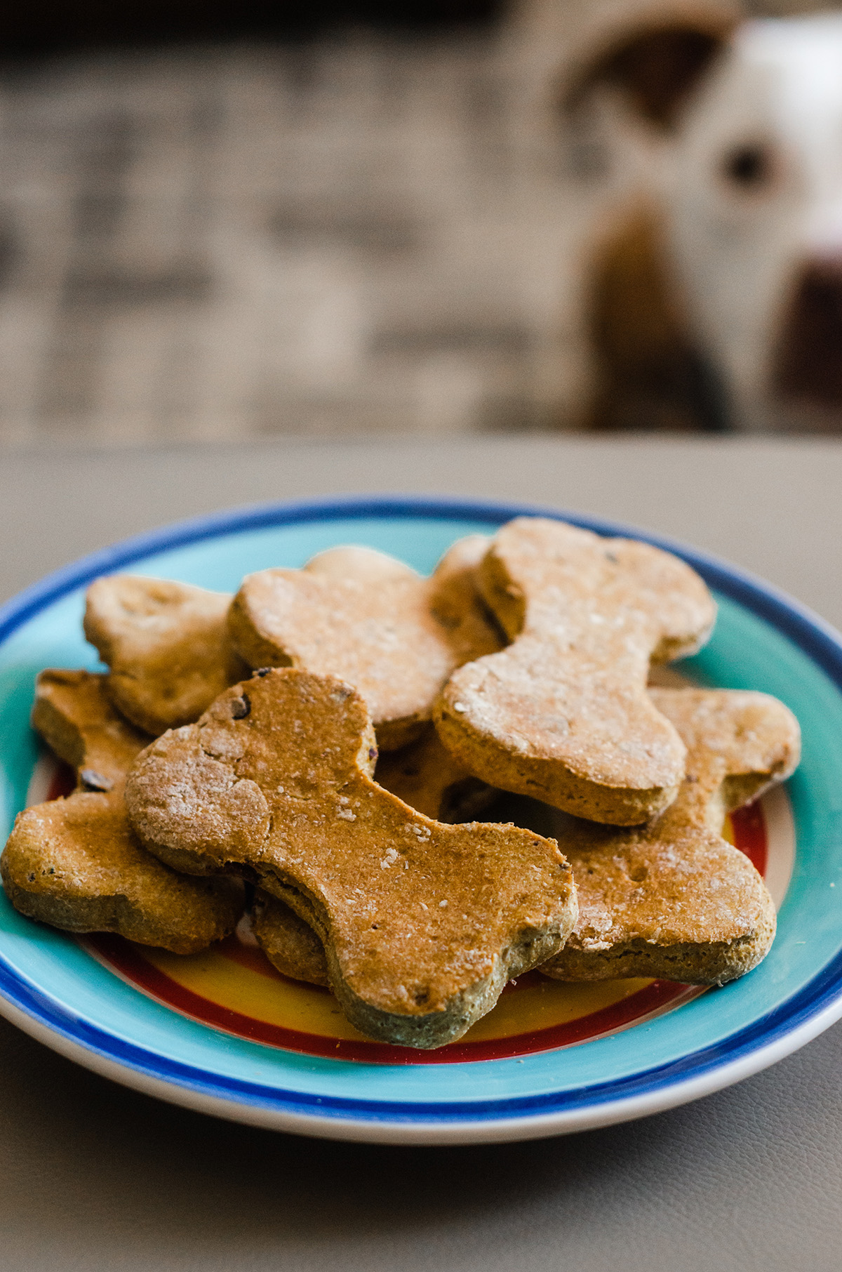 Simple homemade dog treats made with pumpkin puree, whole wheat flour, and bacon.