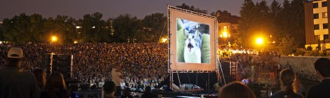 Felines Fascinate Fans at CatVidFest