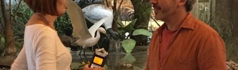 Artist Residency in Everglades