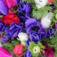 Planting Anemone Coronaria in Zone 6/7 - Cut Flower Farm Gardening for Beginners