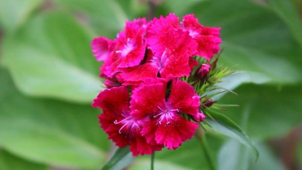 pink_arrangement 009
