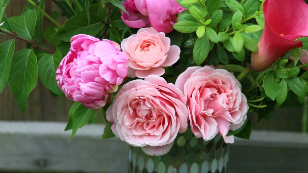 pink_arrangement 023