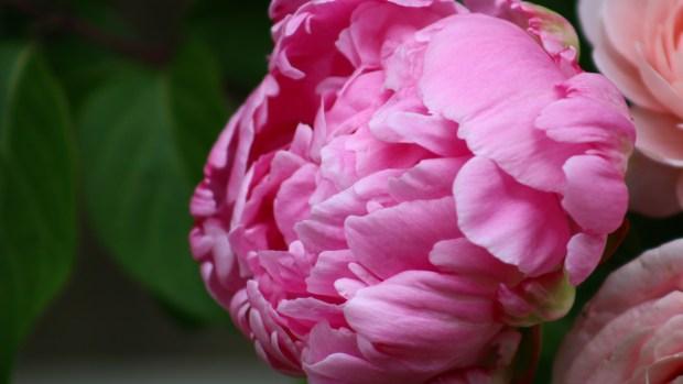 pink_arrangement 048