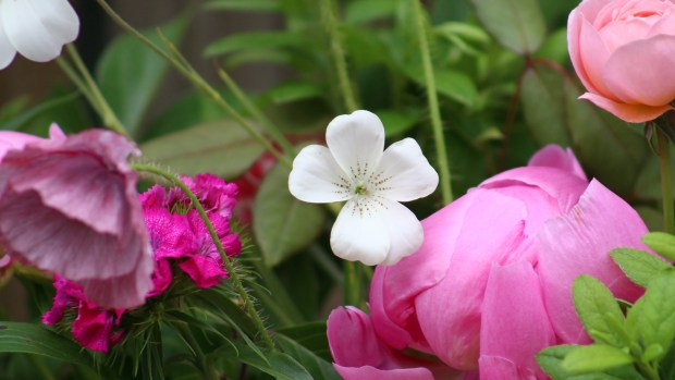 pink_arrangement 074
