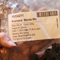 Planting Anemone Blanda Corms - Cut Flower Farm Growing Flowers Gardening for Beginners