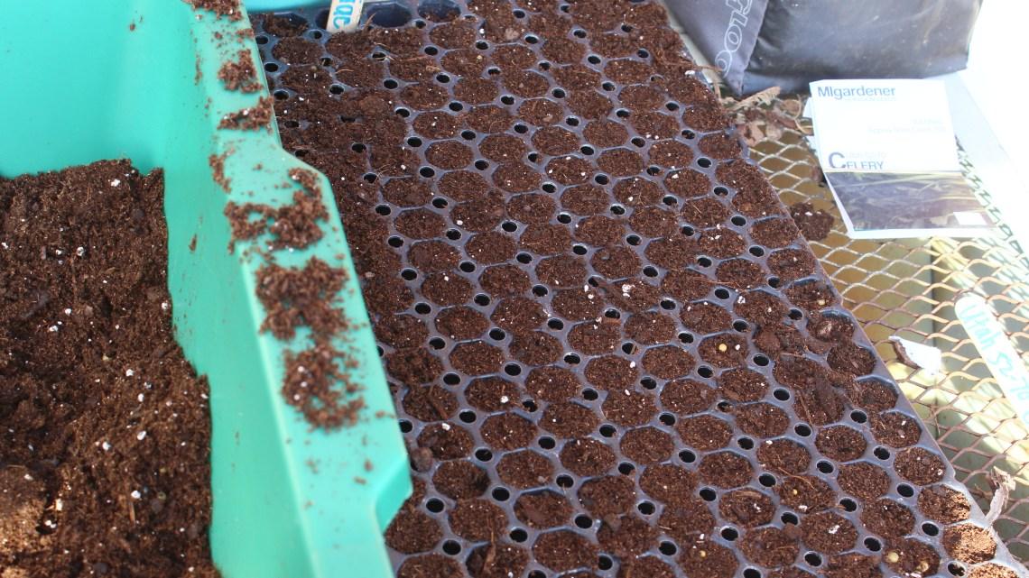 Blanket Flower Seeds