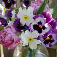 Small, But Mighty! Pansies in Cut Flower Arrangements
