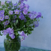 Feeling Blue? Canterbury Bells Flower Arrangement