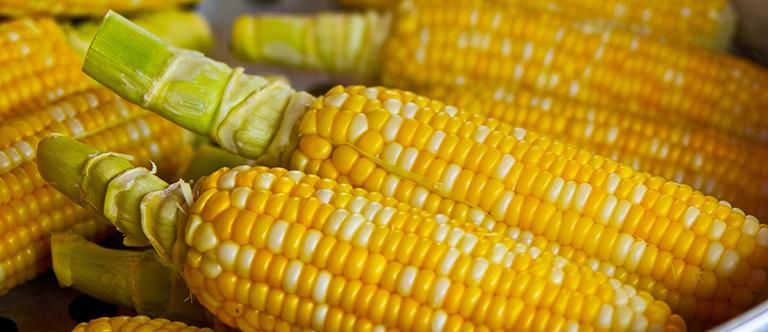 Corn Oil