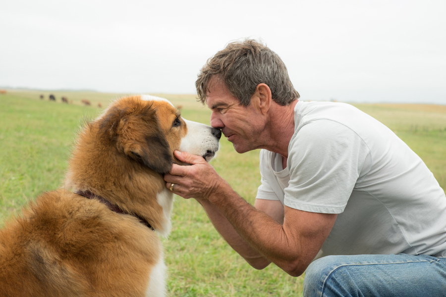 Movie Review: 'A DOG'S PURPOSE' – Many doge. Much tears. Amaze.