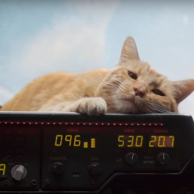 [INTERVIEW] Goose the Cat makes a meow-velous co-star in 'CAPTAIN MARVEL'