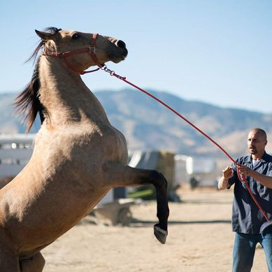 Movie Review: 'THE MUSTANG' is wildly cinematic equine therapy