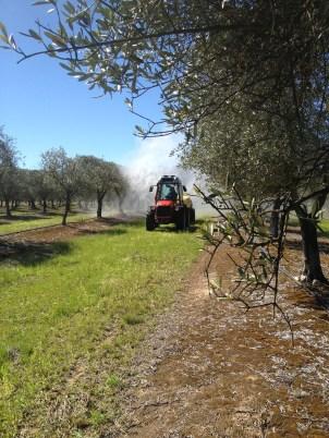 Tornado sprayer demo in the olive grove.