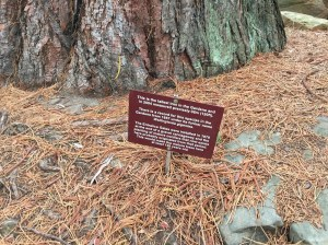 Info about the big tree!