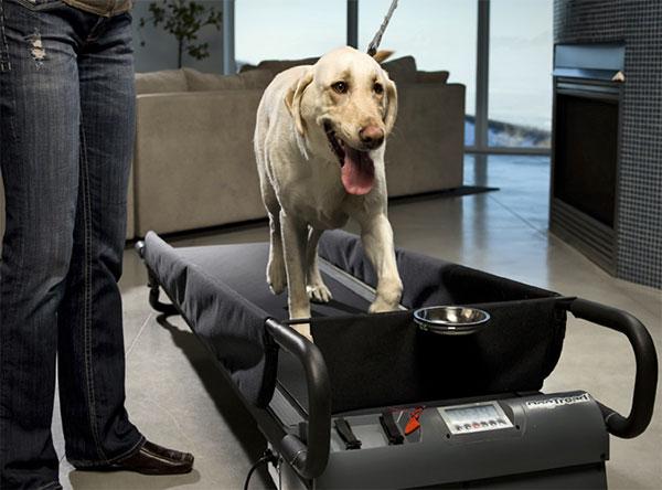 PetZen DogTread een loopband voor honden  Freshgadgetsnl