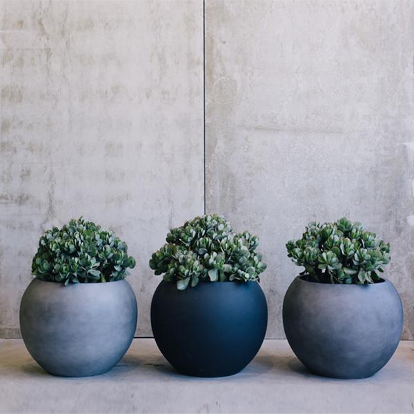Deze prachtige kamerplanten zijn ook in de winter heel
