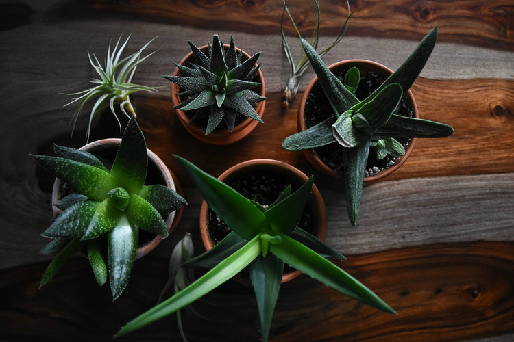 Kamerplanten Raam Zuiden
