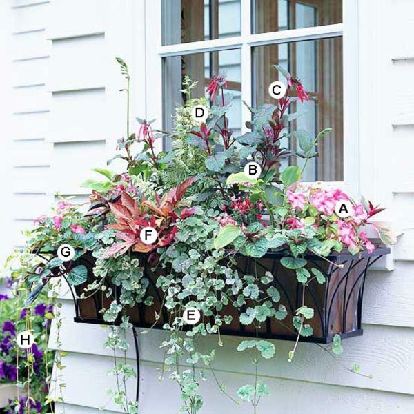 Ideen fr Fenster Blumenkasten  Originelle Vorstellungen