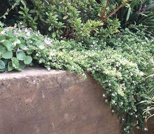 Tipps fr groe Landschaft auf kleiner Garten Flche