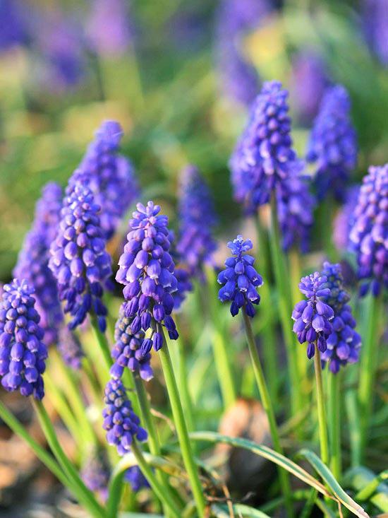 Die schnsten blauen Blumen im Garten anbauen