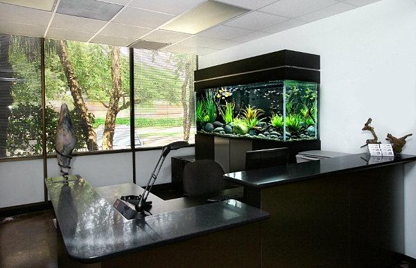 Aquarium am Arbeitsplatz  beruhigende und schne Dekoration