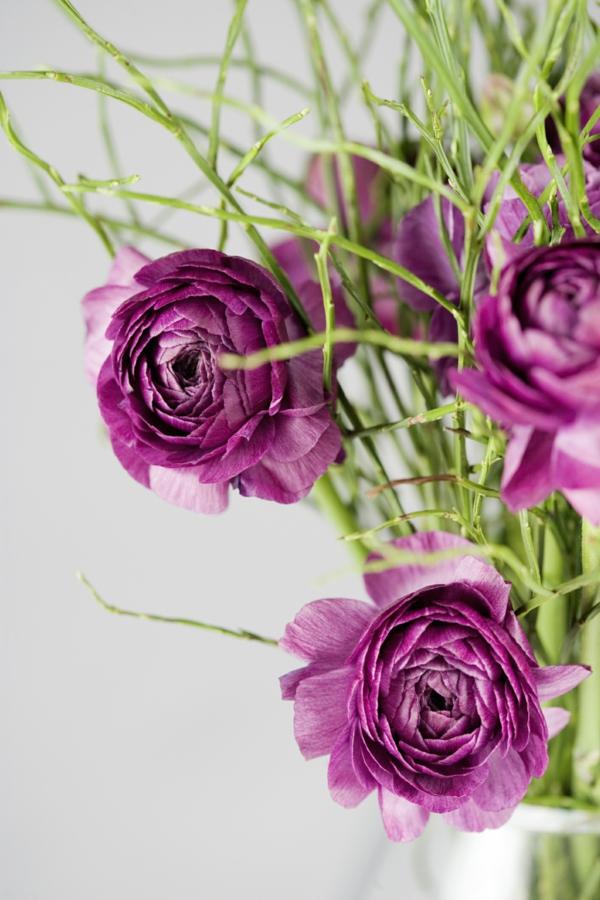 Robuste Zimmerpflanzen  beliebte pflegeleichte Topfpflanzen