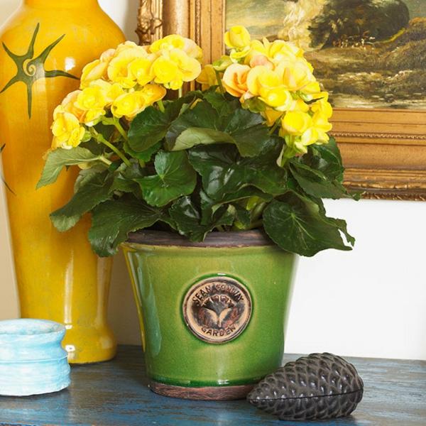 Blhende Zimmerpflanzen  farbige Deko Ideen mit Pflanzenarten