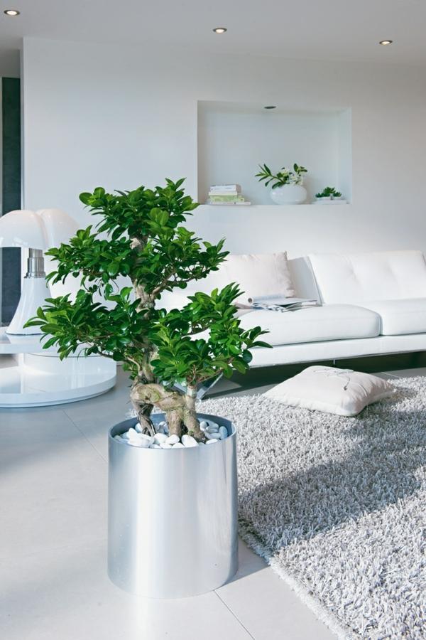 Feng Shui Pflanzen fr Harmonie und positive Energie im Wohnraum
