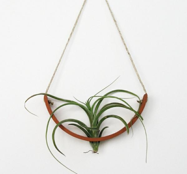Moderne Pflanzgefe fr Luftpflanzen von Experten entworfen