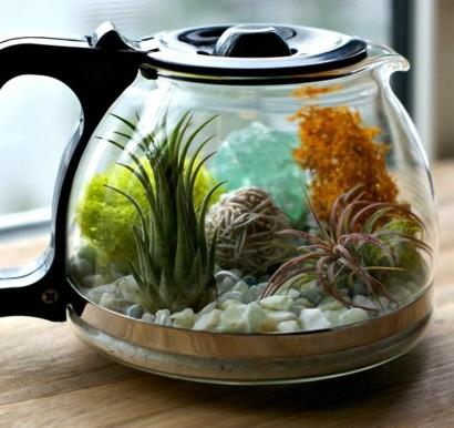KaffeekanneTerrarium mit herrlichen Luftpflanzen selber