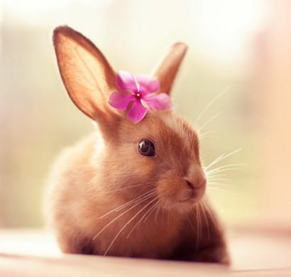 Glckliche Kaninchen stehen vor der Kamera