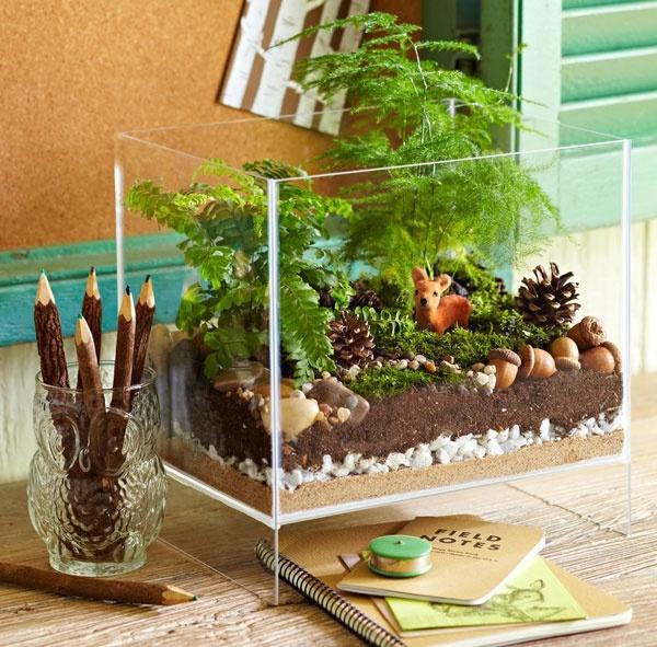 Wie baue ich ein Terrarium  Pflanzen und passende Glasgefe