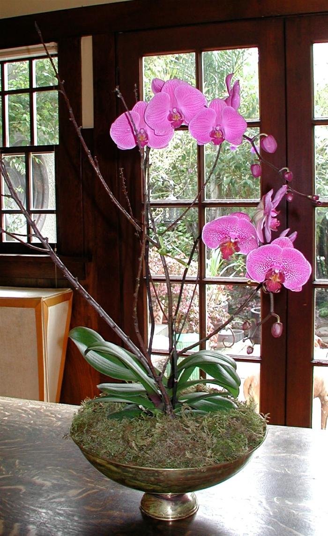 Tipps zur Orchidee Pflege  Wie berdauert die Orchidee lnger
