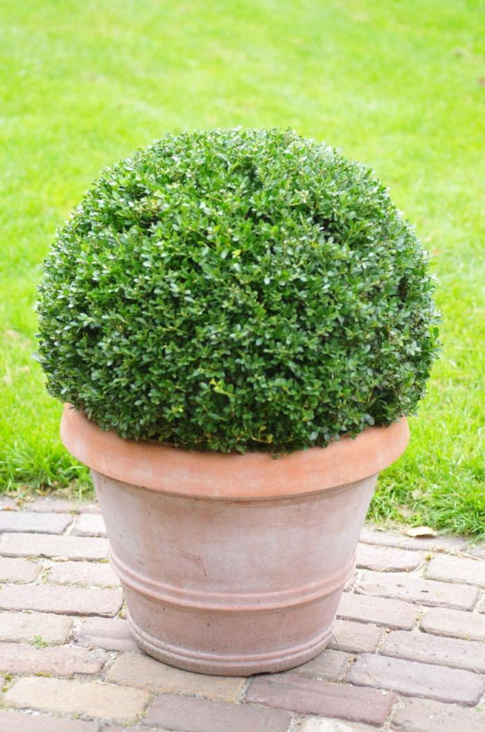 Winterharte Pflanzen Den Garten Das Ganze Jahr Lang Schön Halten