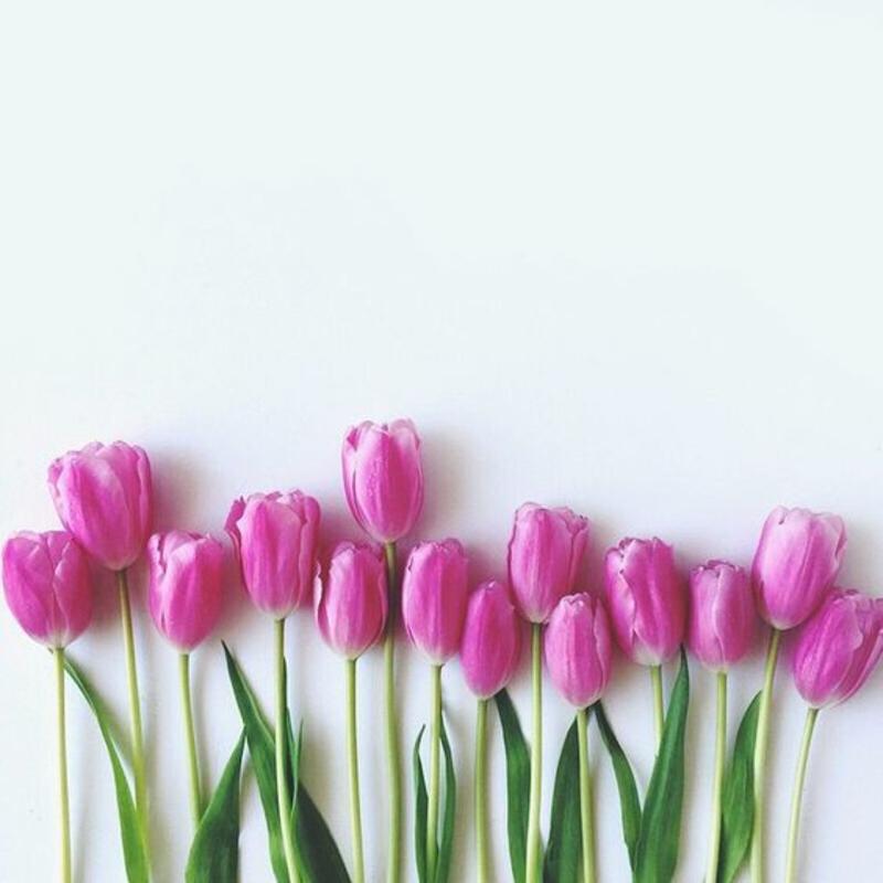 Welche Frhlingsblumen blhen wann