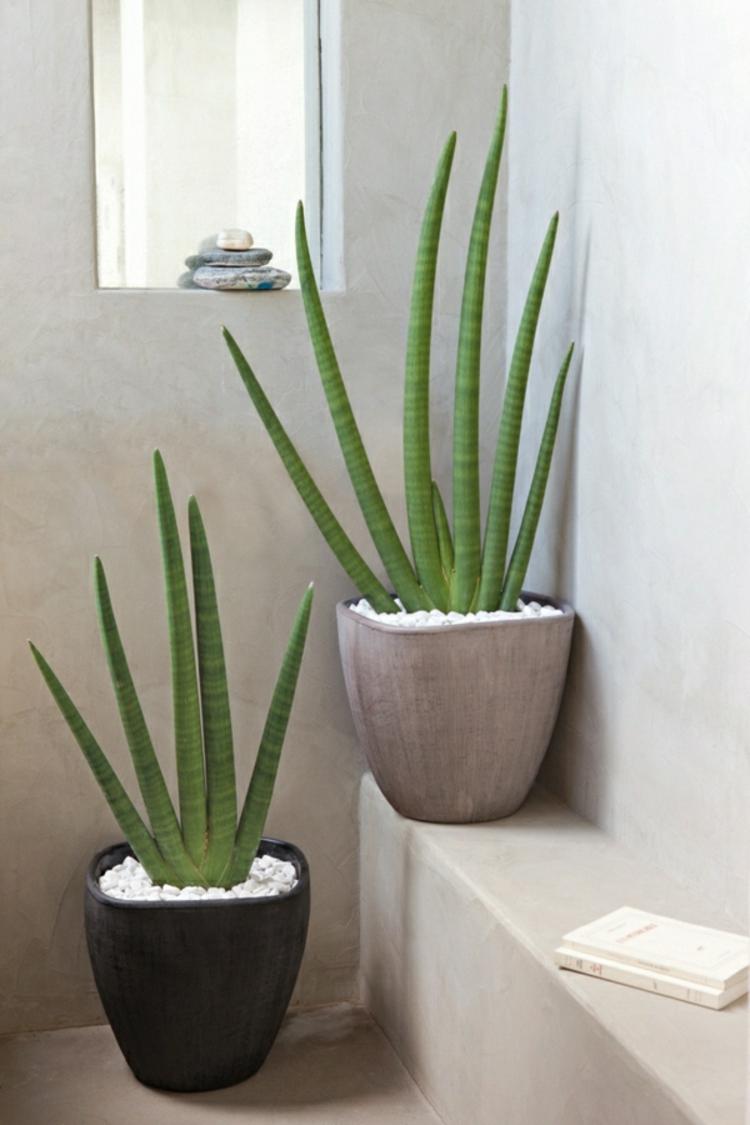 Wohnideen Pflanzen zimmerpflanzen wohnideen menerima info