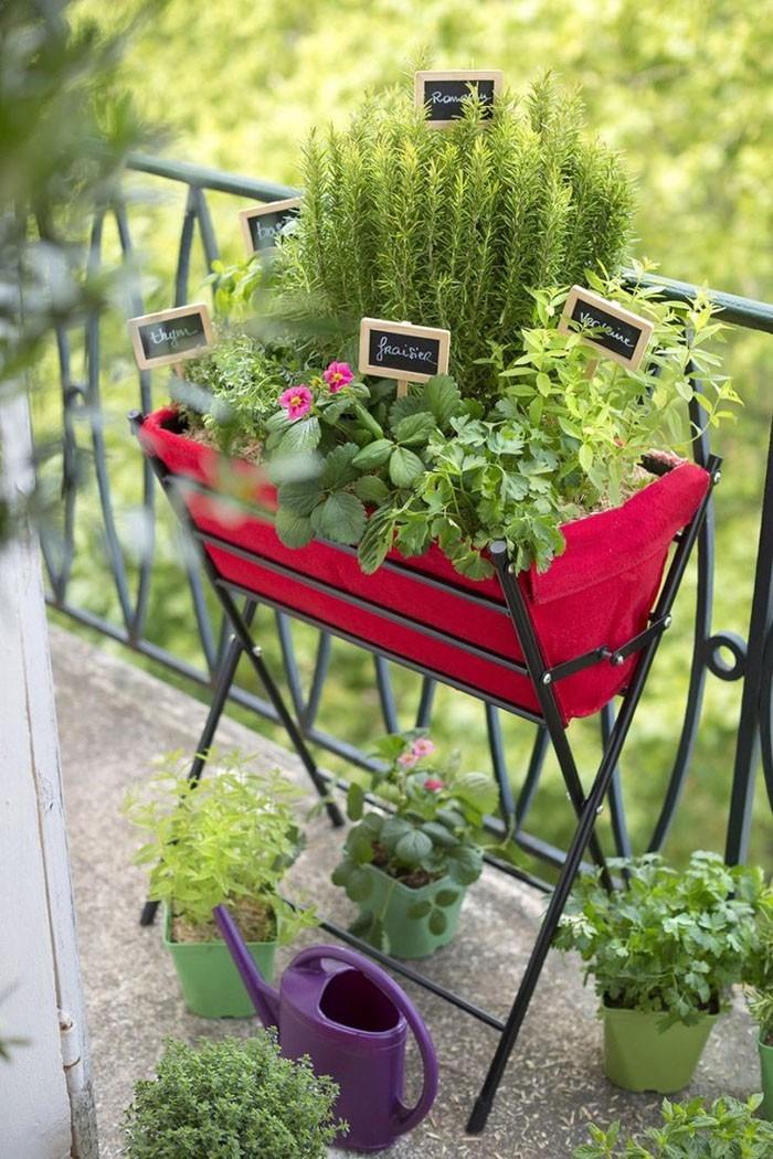 Kleiner Garten Im Blumentopf