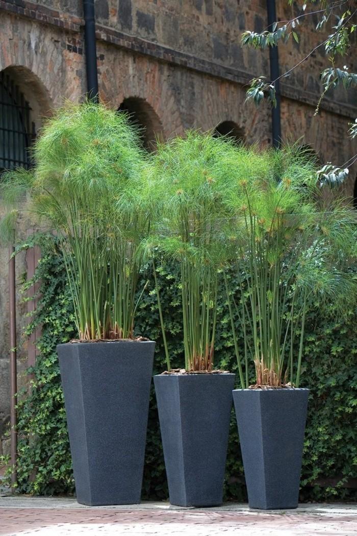 Sichtschutz Pflanzkbel  Sichtschtze knnen auch dekorativ sein