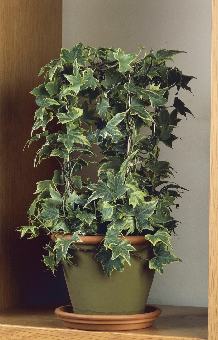 Grne Zimmerpflanzen und Heilkruter die unser Schlaf