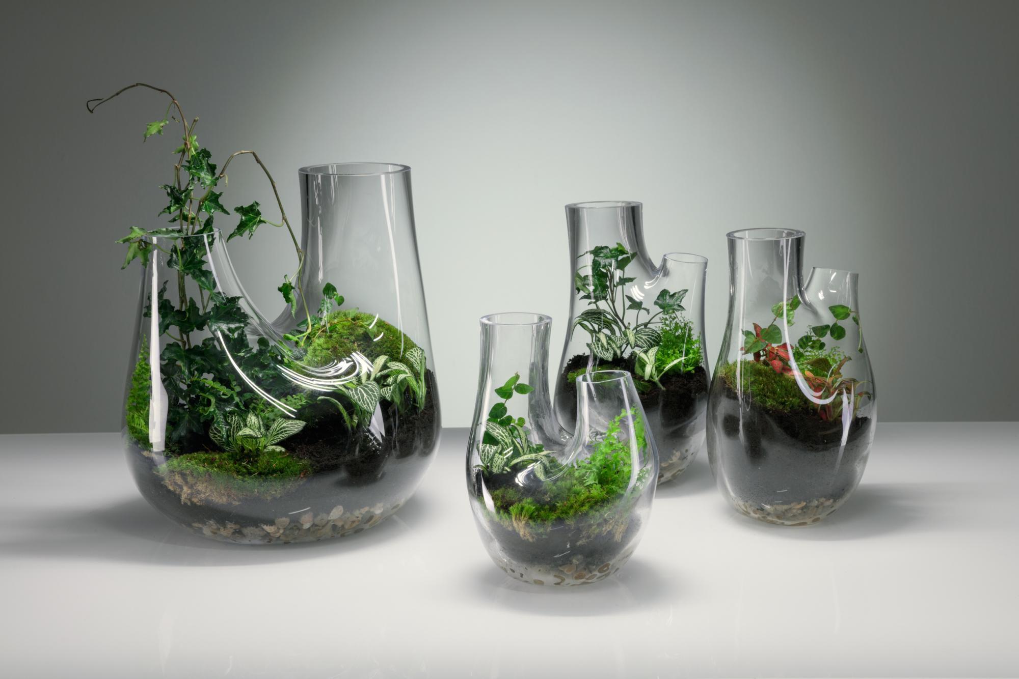 PflanzenTerrarium selber machen Schritt fr SchrittAnleitung